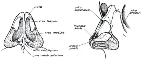anatomia-naso